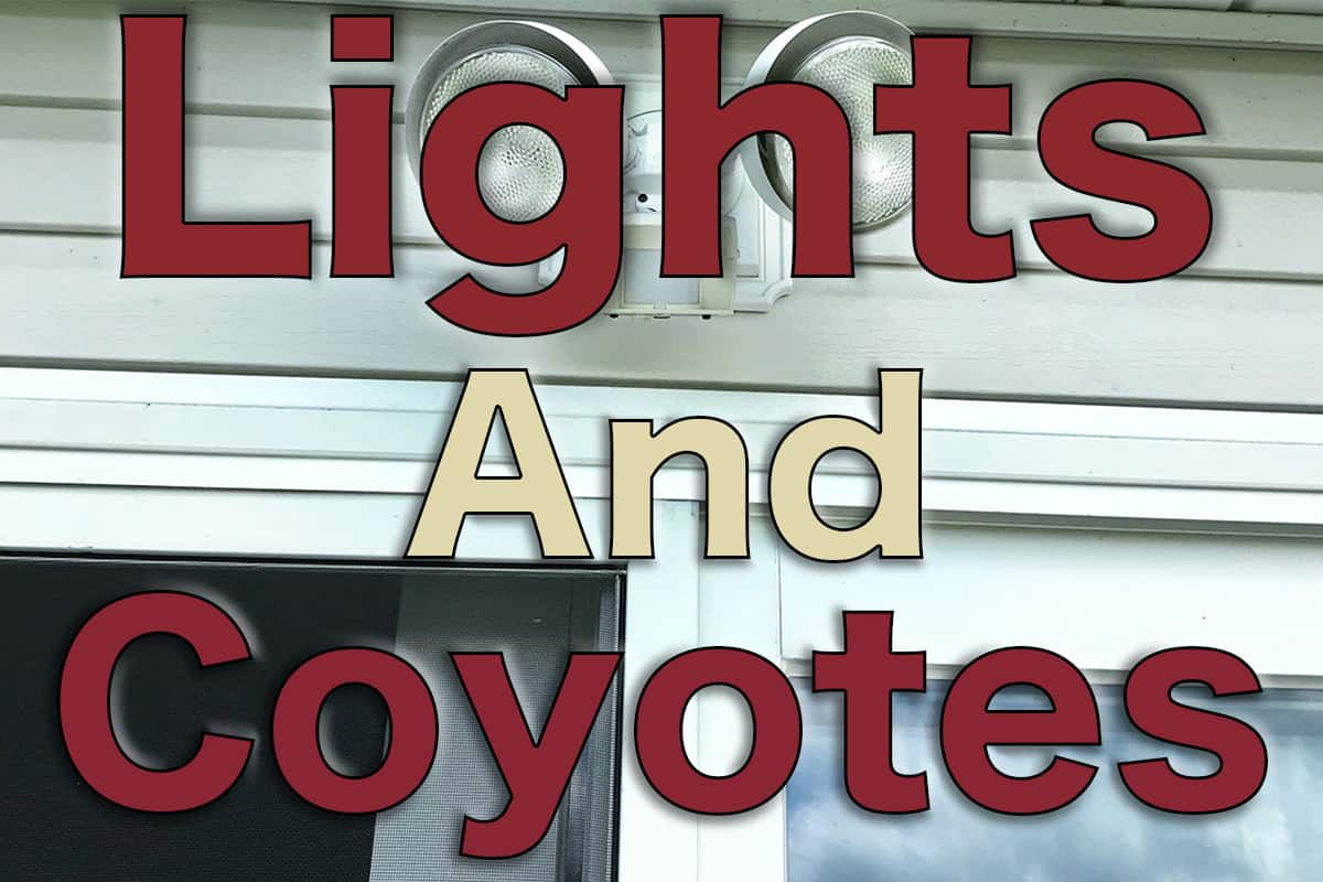 Will Lights Keep Coyotes Away