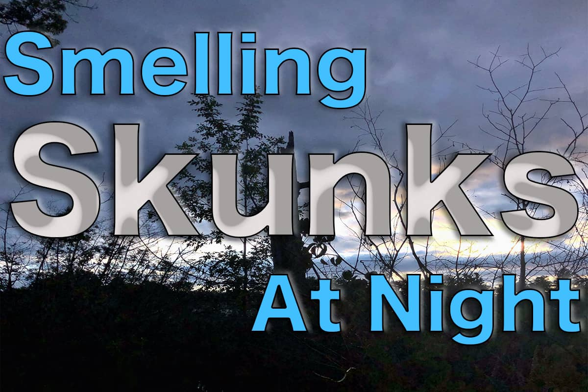 What it Means to Smell Skunk at Night