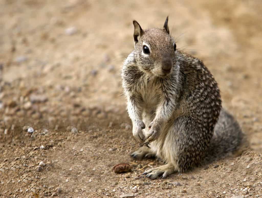 Squirrel With Extremely Sharp Claws
