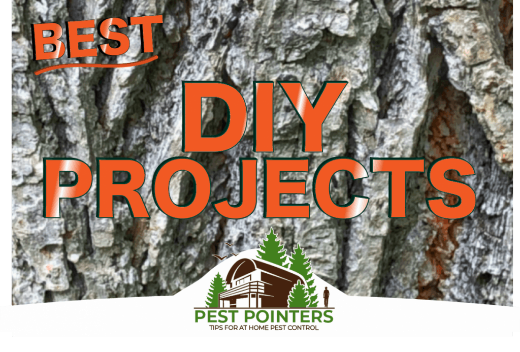 Best DIY Projects to Deter Pests from Your Home