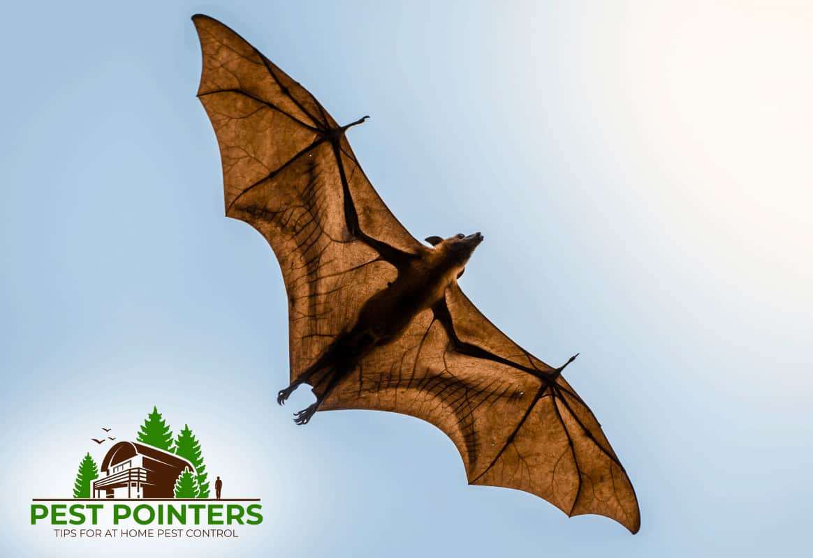 8 Ways That Bats Got Into Your House And How To Get Them Out Pest Pointers Tips For At Home Pest Control