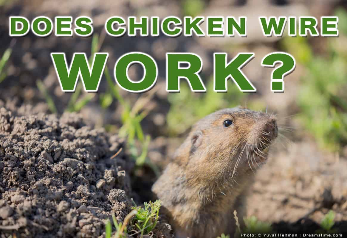 """Gopher Coming Out of Hole With Text """"Does Chicken Wire Work?"""" Over The Top"""