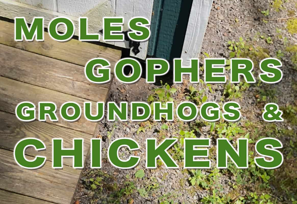 """Image of Hole Under Building With Text """"Moles Gophers Groundhogs & Chickens"""" Overtop"""