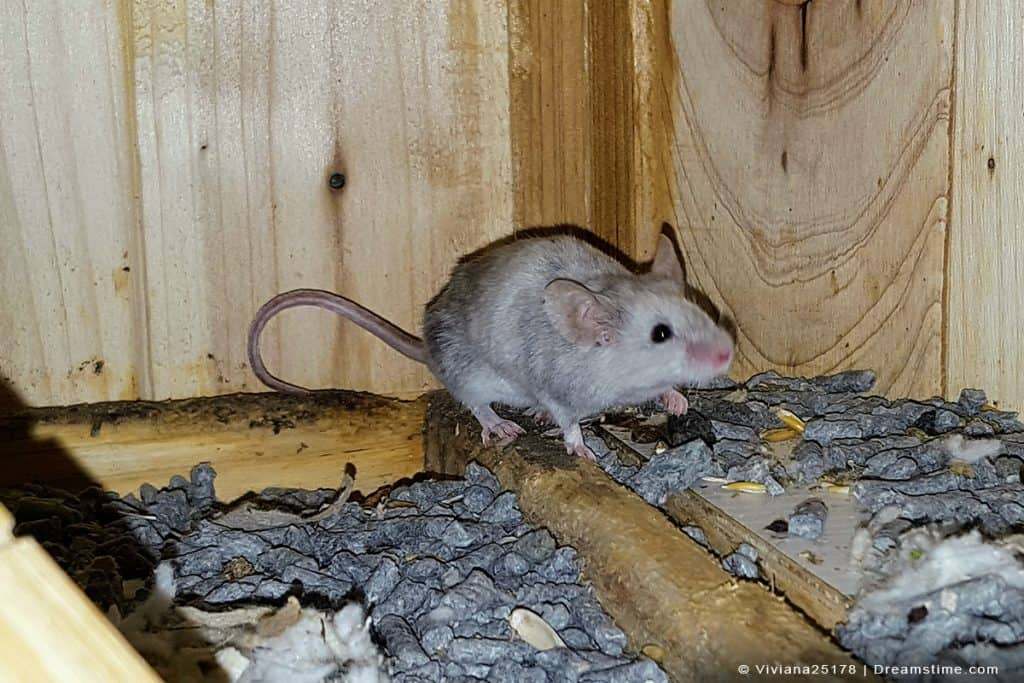 Mouse in shed on ground