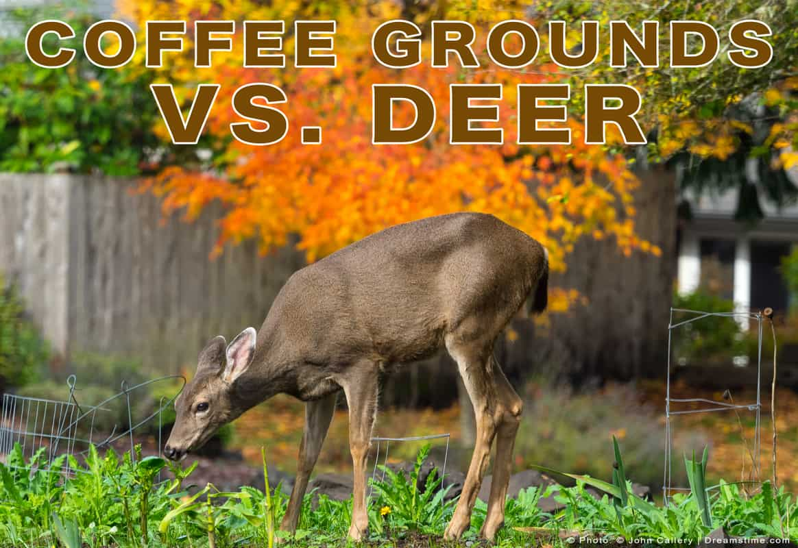 "Picture of Deer Grazing With Text ""Coffee Grounds vs. Deer"" Overtop"