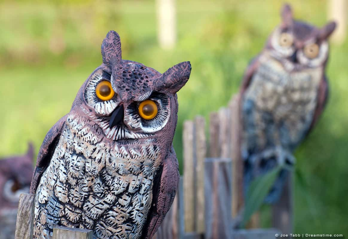 Fake Owl Peering Out In Yard
