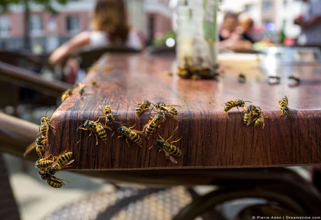 Yellowjacket Wasps On Edge Of Table