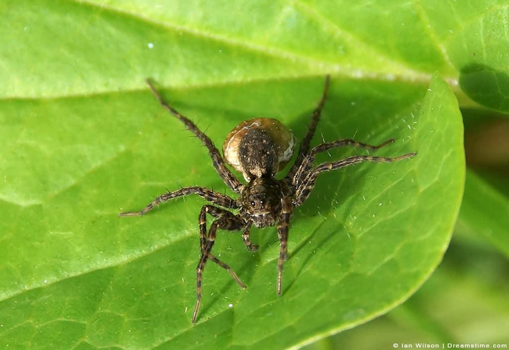 House Spider Sitting on Green Leaf