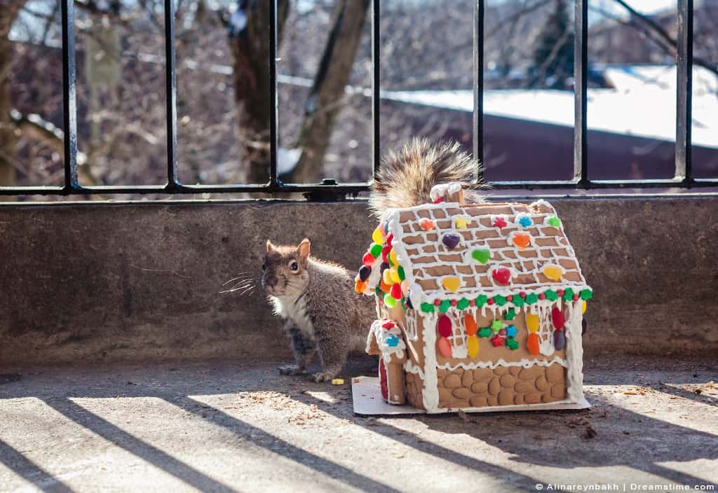 Squirrel Next to Gingerbread House