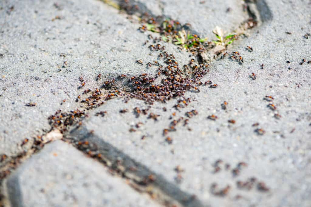 Close-up of a group of ants on the pavement. Shallow depth of field.