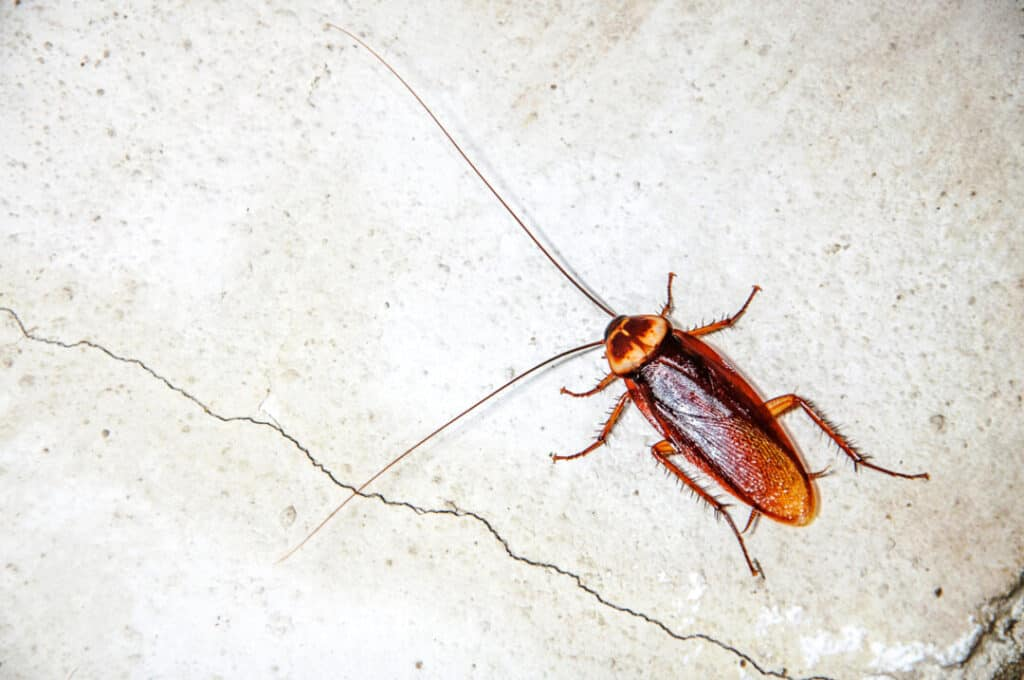 Close up cockroach on the wall
