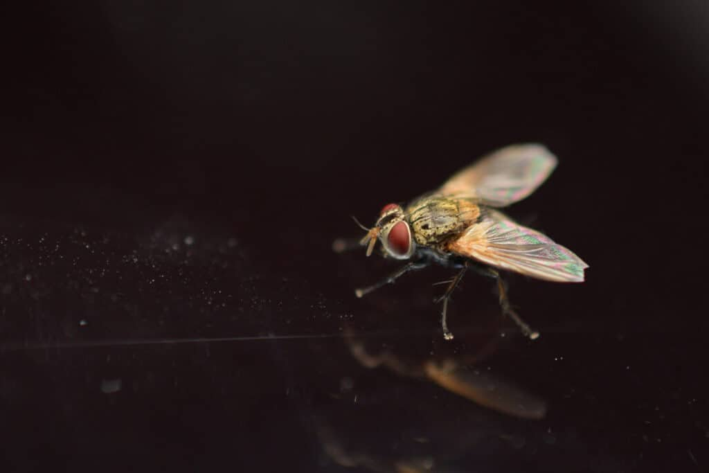 Fly macro shot